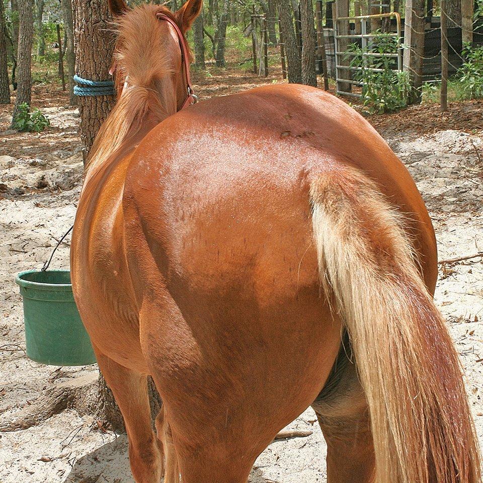 big ass horse